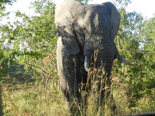 Elephant #3